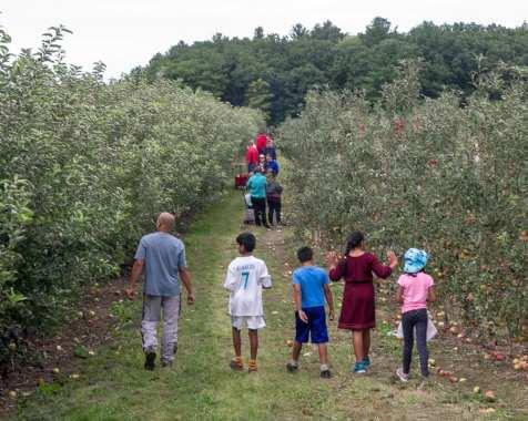 apples web-6265