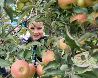 apples web-6272