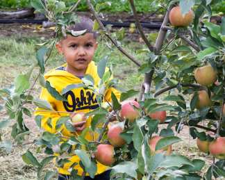 apples web-6303