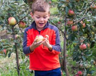 apples web-6350