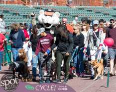 paws in the park-9783