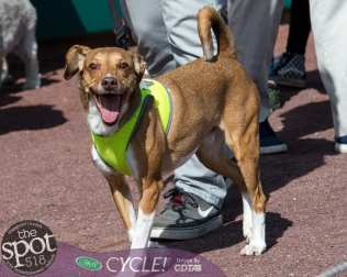 paws in the park-9845
