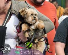 paws in the park-9969