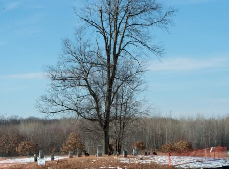 cemetery web-3450