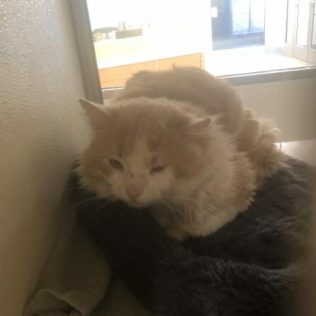 Carpenter is a 3-year-old male