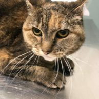 Lilly Pad is a 5-year-old female