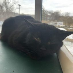 Pooka is a 7-year-old female