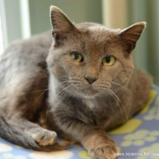 Sloan is a 5-year-old female