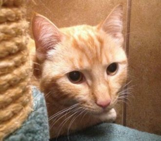 Sumba is a 5-year-old male