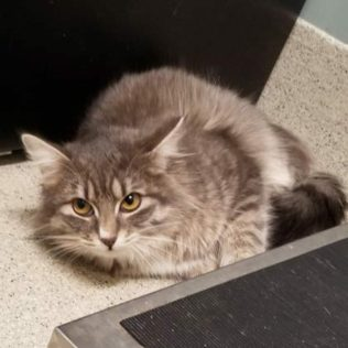 Zahara is an 11-month-old female
