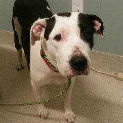 Clover is a 4-year-old female