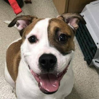 Mac is a 1-year-old male