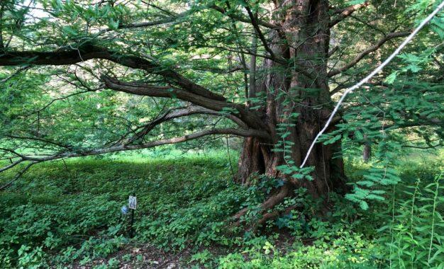 DISCOVER SLINGERLANDS: Pine Hollow Arboretum is the family-friendly nature destination