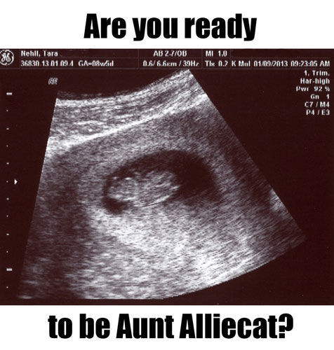 AuntAlliecat