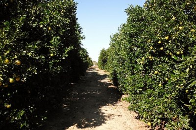 Hurricane Matthew: Florida Citrus Industry Is Relieved