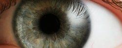 Ein Auge auf jemanden werfen - © Petr Novák, Wikipedia