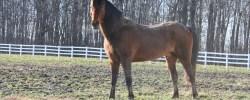 Mit jemandem Pferde stehlen können