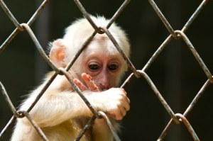 Klappe zu, Affe tot - © lavoview, istockpoto.com