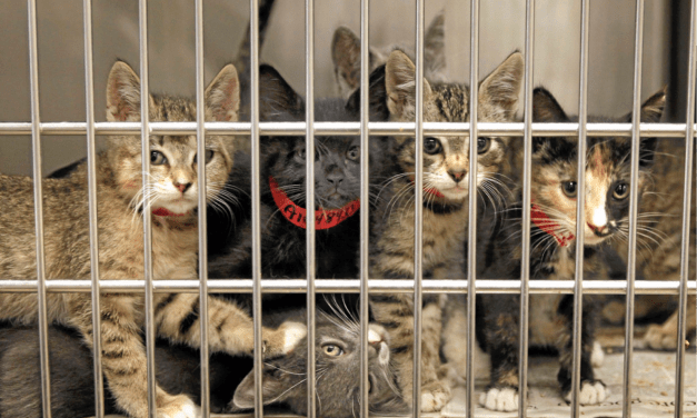 Montgomery County Animal Shelter Directors Suspended With Pay Pending Criminal Investigation