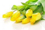 delicious_yellow_tulip_03_hd_pictures_166928