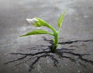 flower-tree-growing-concrete-pavement-101