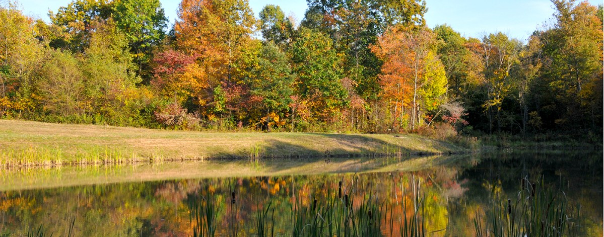 Autumn at Springwood Lake