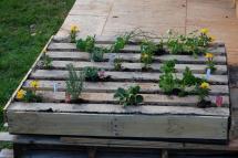 Wooden Pallet Herb Garden Sprinkler Master