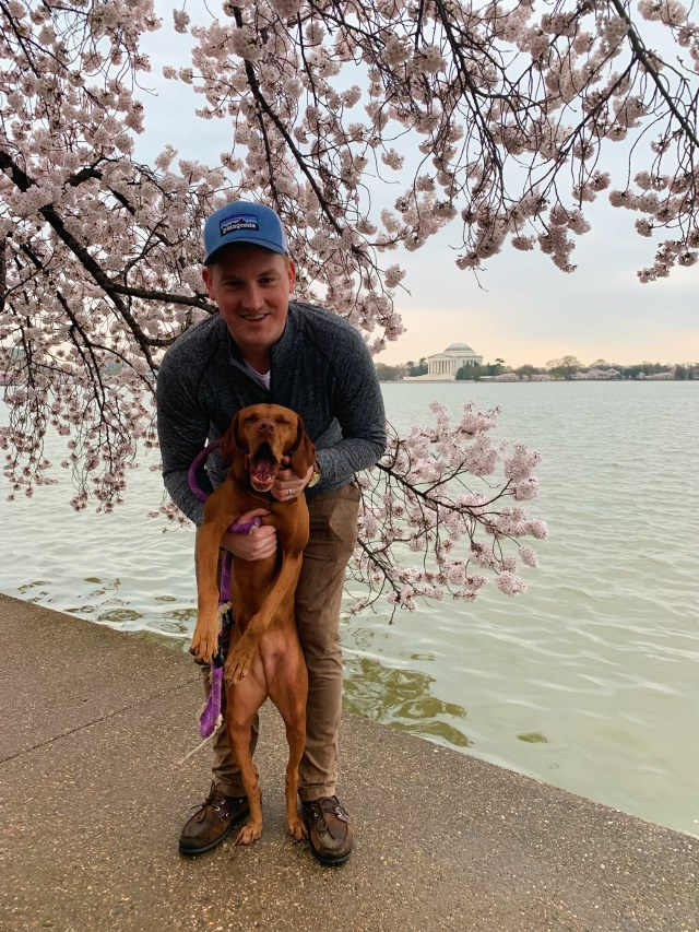 DC Cherry Blossoms 2019