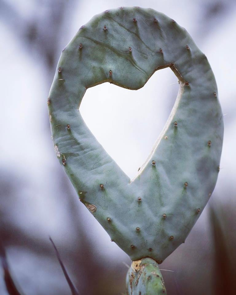 Cactus Heart @sprittibee
