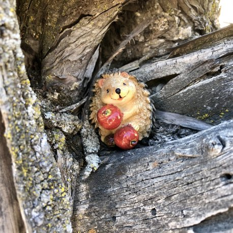 Mini Hedgehog with Apples (2)