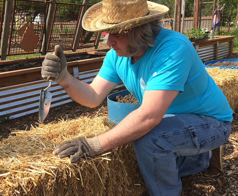 Volunteer getting hay bales ready for strawberry planting