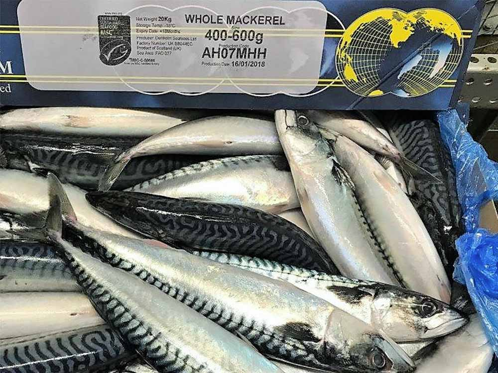 Mackerel and herring flying the flag for growth