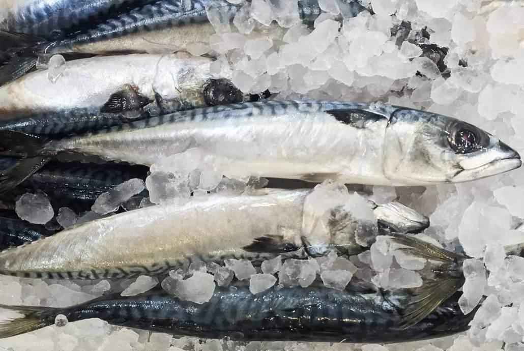 Advocacy group alarmed at Norway mackerel quota grab
