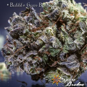 Bubblegum Bubba - Cannabis Macro Photography by Spurs Broken (Robert R. Sanders)