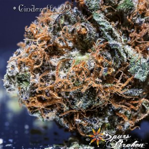 Cinderella 99 - Cannabis Macro Photography by Spurs Broken (Robert R. Sanders)