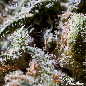 Classic Kush - Cannabis Macro Photography by Spurs Broken (Robert R. Sanders)