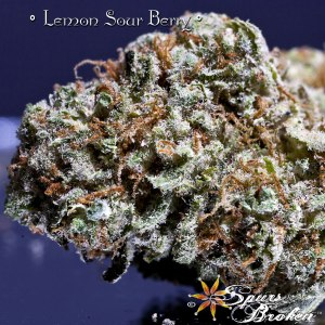 Lemon Sour Berry - Cannabis Macro Photography by Spurs Broken (Robert R. Sanders)