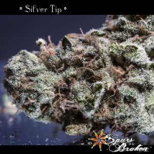 Silver Tip - Cannabis Macro Photography by Spurs Broken (Robert R. Sanders)