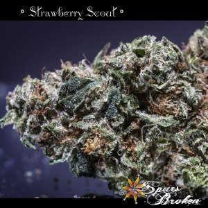 Strawberry Scout - Cannabis Macro Photography by Spurs Broken (Robert R. Sanders)