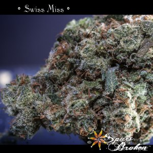 Swiss Miss - Cannabis Macro Photography by Spurs Broken (Robert R. Sanders)