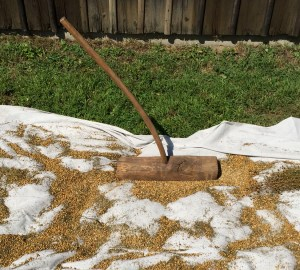 Flail: a long handled wooden tool used to crush the husks of the flax seed balls.