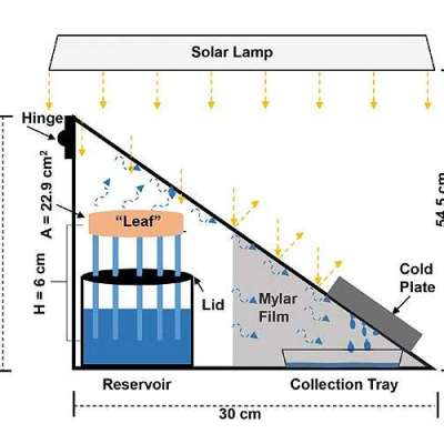 Synthetic tree enhances solar steam generation for harvesting drinking water