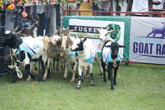 Opinion: Uganda Could Become World's 2nd Goat Racing Capital After Buccoo, But Do You Know Its Origin & Meaning?