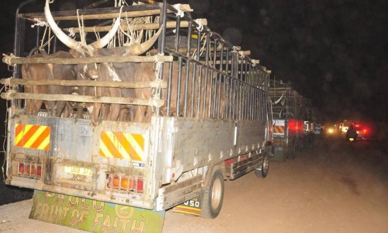 Minister Joy Kabatsi Warns Butchers Over Animal Rights