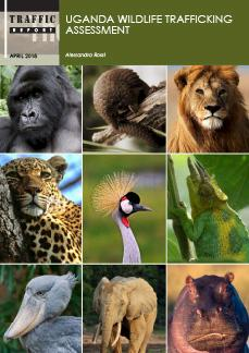 Uganda Hosts 16th African Wildlife Consultative Forum, Minister Kamuntu Warns.