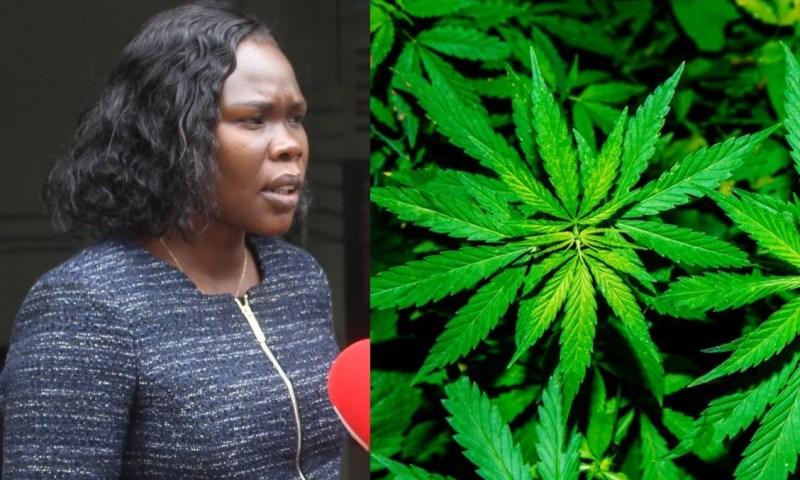 Min.Anite Directs UIA To Cancel Marijuana Plantation Deal