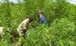 Hima Locals Reject Gov't Marijuana Deal
