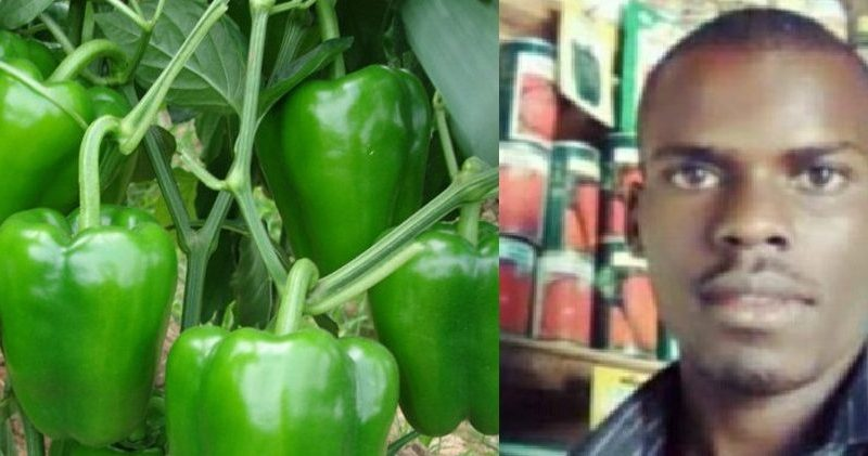 Farmers Guide With Joseph Mugenyi: Sweet/ Bell Pepper Growing