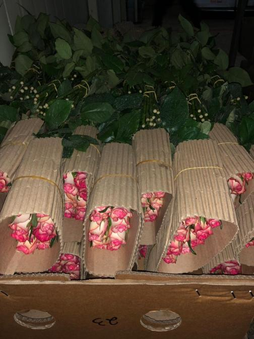 Roses Ready for export