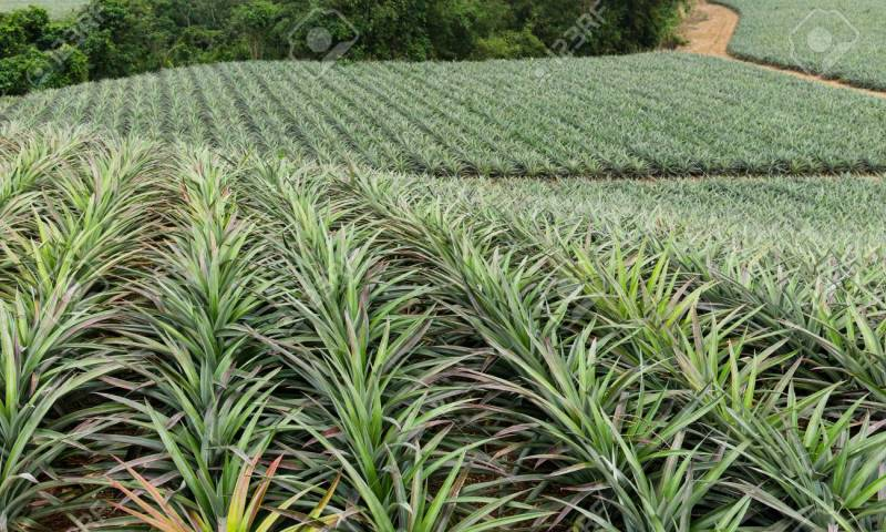 Agriculture Boosted As Parliament Approves US$65 Million Loan For Farmers